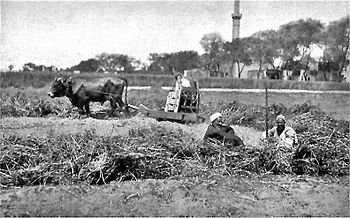 Threshing Cart (plostellum Punicum) In Heliopolis, Egypt In 1884