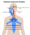 Thyroid system-IT.png
