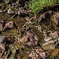 Tischer Creek Bed, Lakewalk, Duluth (35435144335).jpg