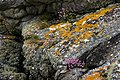 Torr Righ and King's Cave trail, Arran 09.jpg