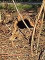 Toucy-FR-89-Bois Terrier-coupe forestière-05.jpg