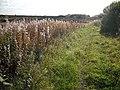 Track, Longriggend - geograph.org.uk - 1492615.jpg