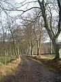 Track from Pitmurchie to Sauchenbush. - geograph.org.uk - 303960.jpg