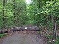 Track in Lundimore wood - geograph.org.uk - 1283282.jpg