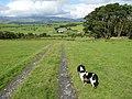 Track to Swch yr Hafod - geograph.org.uk - 934476.jpg