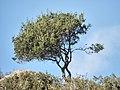 Tree 9112.jpg