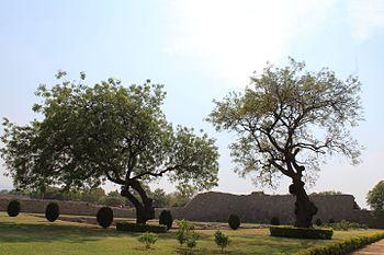 Trees at Humpi.jpg