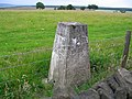 Trig point on Stainburn Moor - geograph.org.uk - 30326.jpg