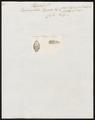 Trigonocephalus hypnale - kop - 1700-1880 - Print - Iconographia Zoologica - Special Collections University of Amsterdam - UBA01 IZ11700061.tif