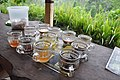 Trying different coffee varieties and flavours - Satria coffee plantation (17057131391).jpg