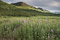 Turnagain Pass, Chugach National Forest, Alaska.jpg