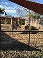 Two zebras - Houston Zoo.jpg