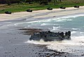 US Navy 020528-N-0401E-013 Cobra Gold - LCAC.jpg