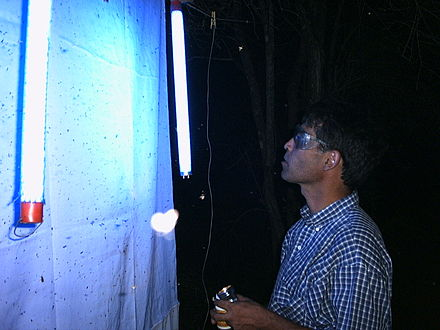 Entomologist using a UV light for collecting beetles in Chaco, Paraguay. Ultraviolet trap entomologist.jpg