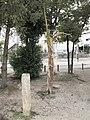 Uma-tsunagi-no-Nezu-no-ki, Okehazama-Kita3 Midori Ward Nagoya 2012.jpg