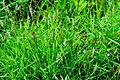 Unidentified plants in India 08602.jpg