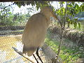 Unknown animal 9 (Sitesh Babu's Zoo).jpg