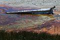 Upper Geyser Basin Yellowstone 07.JPG