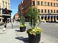 Uppsala - city centre.JPG