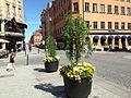 Uppsala - city centre.JPG