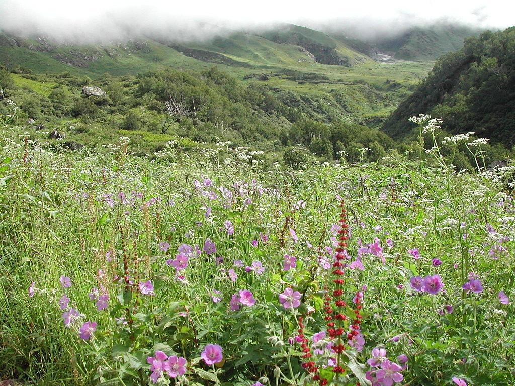36 Gorgeous s of Valley of Flowers National Park in India Places BOO