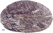 Category:Jurassic Chile - WikiVisually