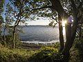 Vejlø skov - panoramio (3).jpg