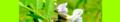 Vicia sepium. Reader.png