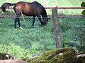 Vid kyrkogårdsmuren häst i hage 03.JPG