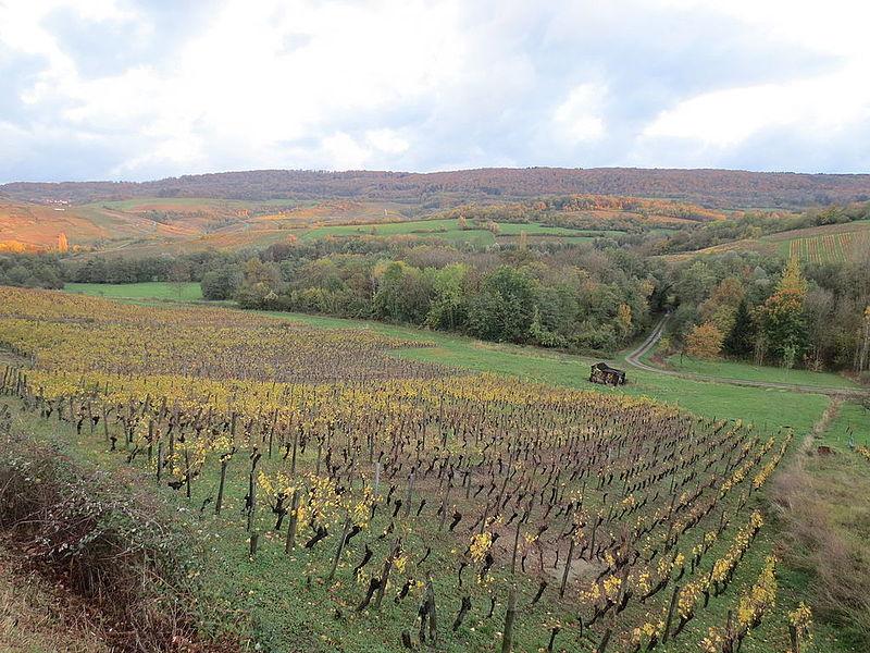 Vignoble du Jura 002.JPG
