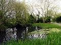 Village Pond, Upper Green - geograph.org.uk - 6311.jpg