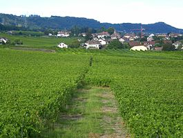 Vineyards in Vinzel
