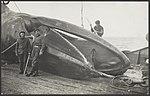 Visserij Walvisvangst, Bestanddeelnr 036-0165.jpg
