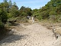 Voorne, dune landscape - panoramio.jpg