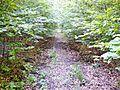 Wanderweg - panoramio (11).jpg