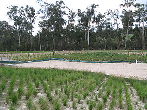 Restoration ecology - Recently constructed wetland regeneration in Australia, on a site previously used for agriculture