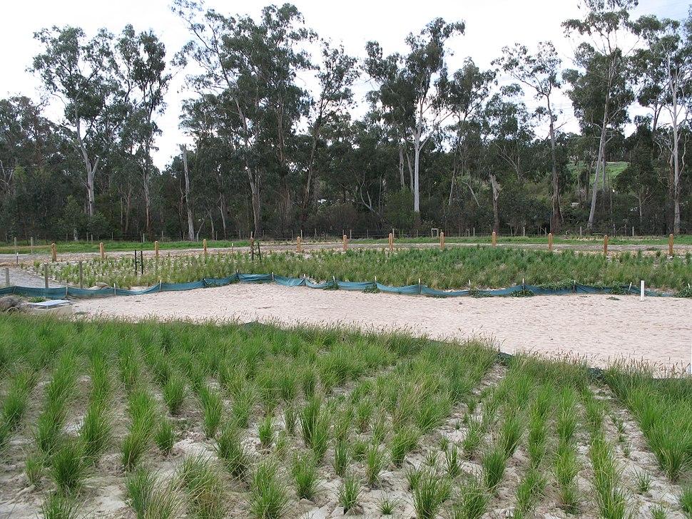 Wetland restoration in Australia