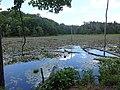 Wetlands of Calvert Cliffs State Park 01.jpg