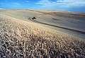 Wheat harvest on the Palouse.jpg