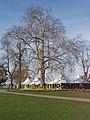 White Peaks, Kew Gardens - geograph.org.uk - 362319.jpg