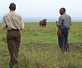 White rhino monitoring (6880953537).jpg