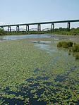Whitefish Pond and Sault International Bridge 3.JPG
