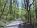 Wielkopolski Park Narodowy wiosną 8.jpg