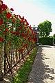 Wien - Rosarium - Schloß Schönbrunn - View WNW.jpg