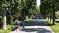 Wien 01 Volksgarten y.jpg