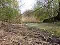 Wienerberg-pond natural2v4.JPG