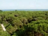 File:Wiki-Video-pineta eraclea.ogv