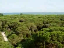 Datei:Wiki-Video-pineta eraclea.ogv