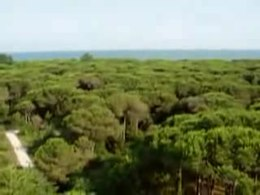 Bestand:Wiki-Video-pineta eraclea.ogv