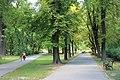 Wiki.Vojvodina VII Subotica 5355 01.jpg